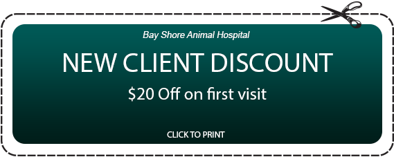 Bay Shore Animal Hospital NEW CLIENT DISCOUNT $20 Off on first visit CLICK TO PRINT